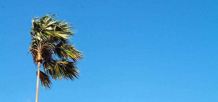 cer-palmier-albastru